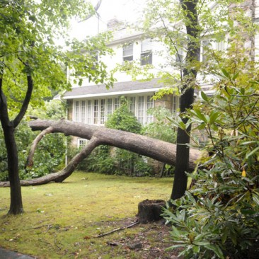Photos of Swarthmore taken the day after Hurricane Irene.