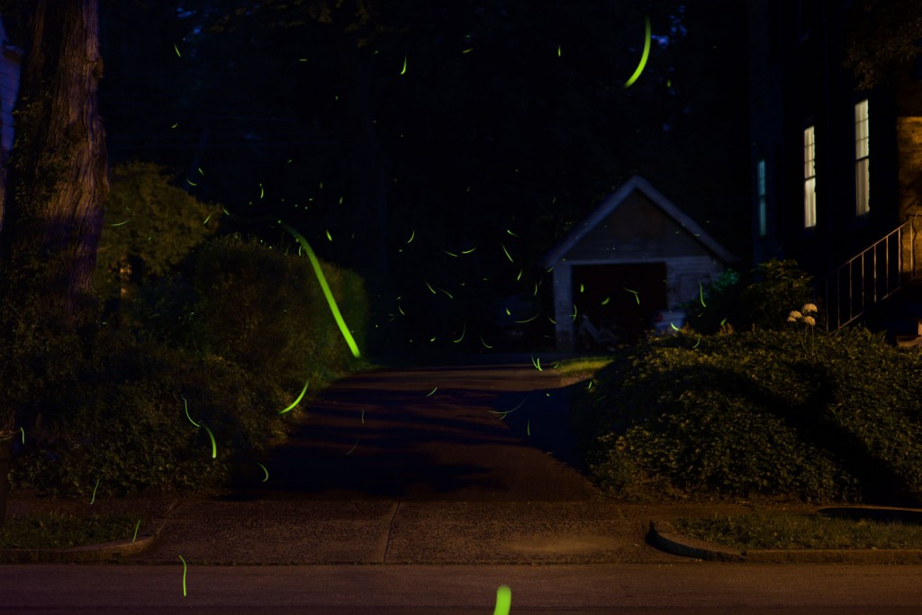 fireflies-4016